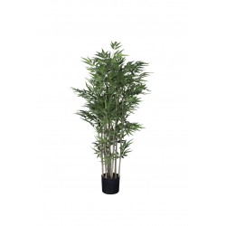 Plant Bamboe small