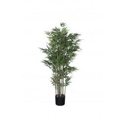 Plant Bamboe large