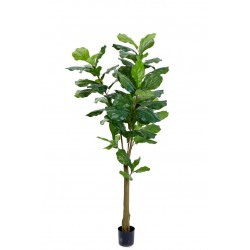 Plant Fiddle leaf tree small