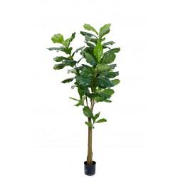 Plant Fiddle leaf tree large
