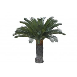 Plant Cycas Palm Large