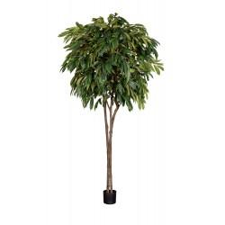 Plant Longifolia